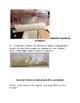 Digestion Lab-Human Anatomy