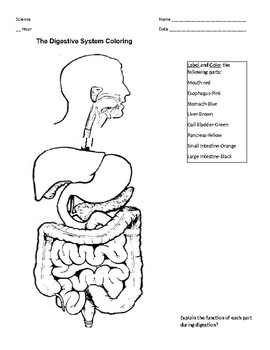 elementary body systems coloring pages - photo#19
