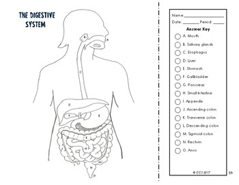 Digestive & Excretory System Coloring