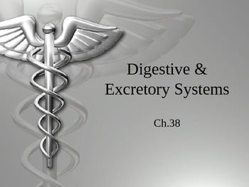 Digestive & Excretory System PowerPoint
