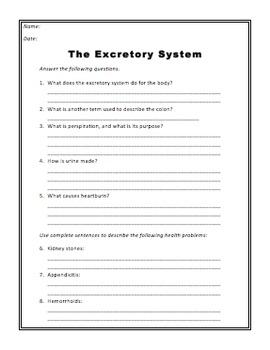 Digestive & Excretory System Worksheets