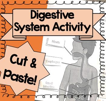 Digestive System Activity