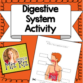 Digestive System Activity