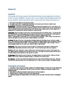 Digestive System Alternative Creative Assessments