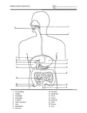 Digestive System Anatomy Test