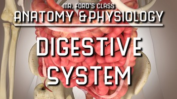 Digestive System: Anatomy and Physiology