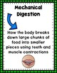 Digestive System Anchor Chart Posters
