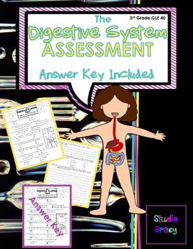 Digestive System Assessment