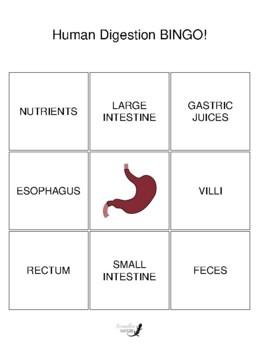 Digestive System BINGO - Custom Version!