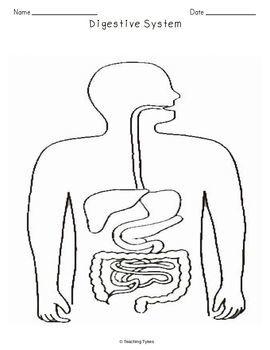 Digestive System Biology Science Crossword Coloring Worksheet Middle School