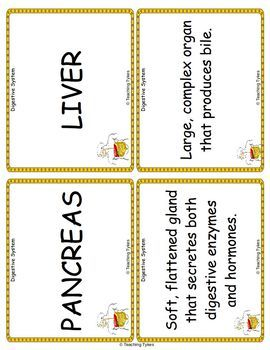 The Digestive System Vocabulary Cards
