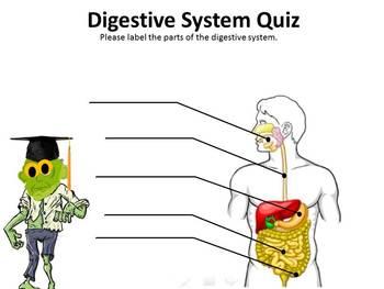 Digestive System BrainBlast