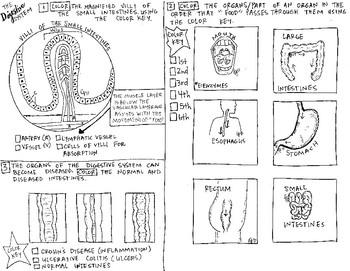 Pin by Mª Ángeles Garcia Vacas on Anatomy and Physiology | Anatomy ... | 271x350