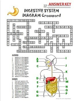 Digestive System Crossword ... by Tangstar Science | Teachers Pay ...