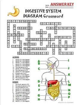 Digestive System Crossword ... by Tangstar Science | Teachers Pay ...