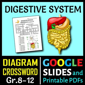 Digestive system crossword with diagram editable by tangstar science digestive system crossword with diagram editable ccuart Images