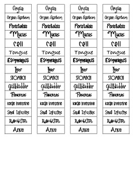 Digestive System and Organization Cut-n-Paste Vocabulary
