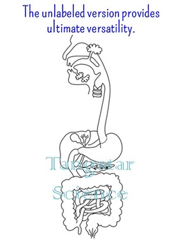Digestive System Diagram {Personal Use License}