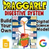 Digestive System - Digital Draggable Science Model