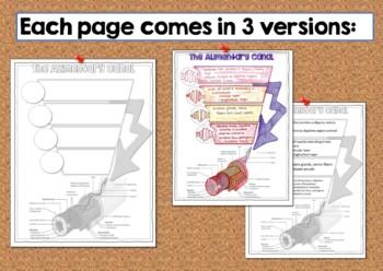 Digestive System Doodle Notes