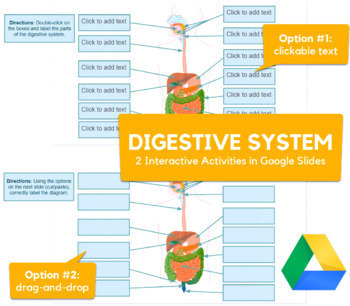 Digestive System - Drag-and-drop with Google Slides