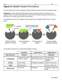 Digestive System: Enzyme Flowcharts