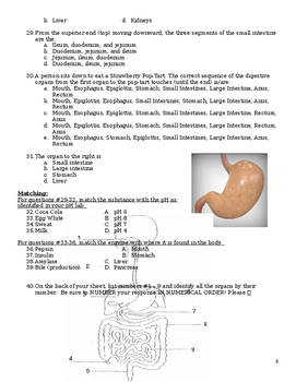 Digestive System Exam