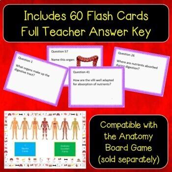 Digestive System Flash Cards