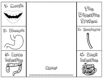 digestive system foldable note catcher