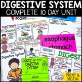 Digestive System informational book and coloring notes   Body Organs