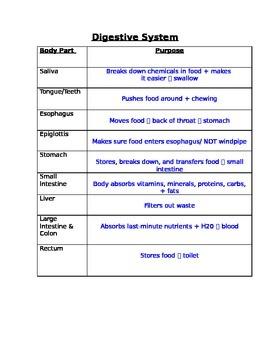 Digestive System Graphic Organizer