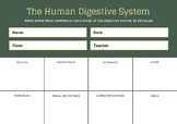 Digestive System Graphic Organizer