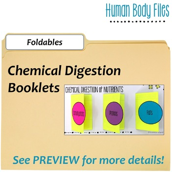 Digestive System Human Body Files