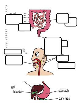 Digestive System Interactive Lessons