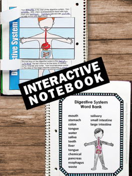 Digestive System Activities Human Body Systems Interactive ...