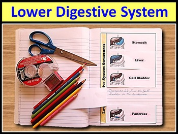 Digestive System - Interactive Notebook - Set of 16 Foldable Activities