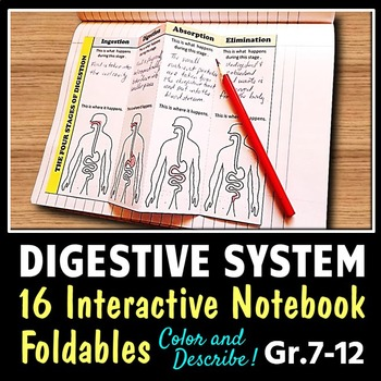 Digestive System - Interactive Notebook - Set of 16 Foldab