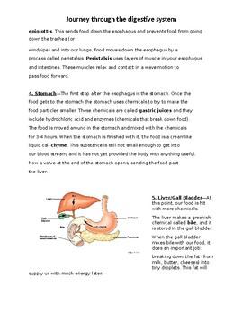 Digestive System Journey