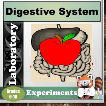 Digestive System Lab