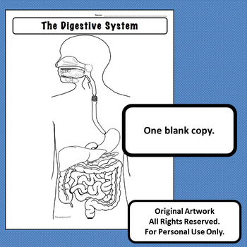 Digestive System Diagram Personal Use Only Anatomy and Physiology