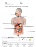 Digestive System - Label the parts