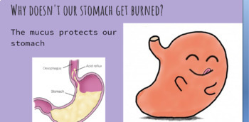 Digestive System Lesson -- PowerPoint and Lab (cure an upset stomach)