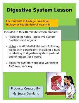 Digestive System Lesson (college prep biology)