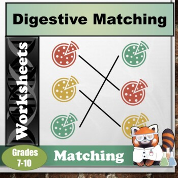 Digestive System Matching Sheet