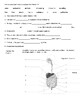 Digestive System Worksheet