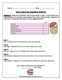 Digestive System: Measurement Activity