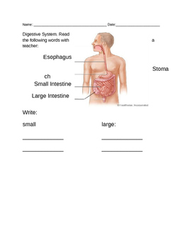 Digestive System-Modified