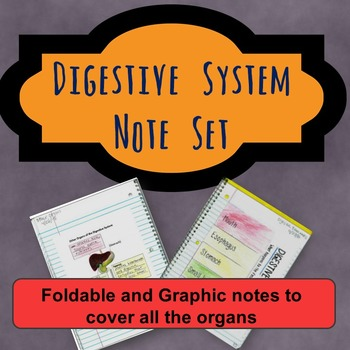 Digestive System Note Set: Foldable and Graphic notes for all the organs