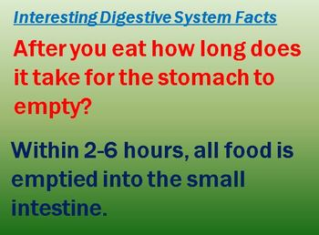Digestive System Notes Digestive System Anatomy Powerpoint Presentation