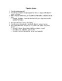 Digestive System Organs Presentation